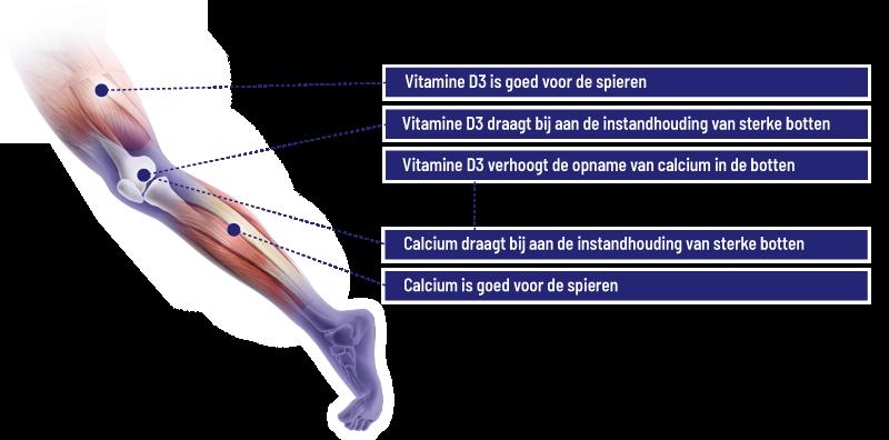 Werking Vitamine D3 & Calcium